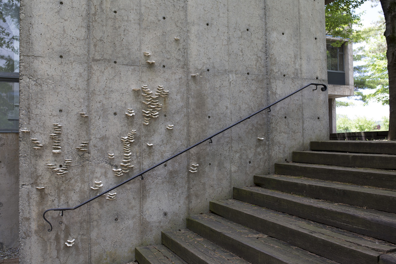 Photograph of Stairway to Enlightenment - AO-00123-001.jpg