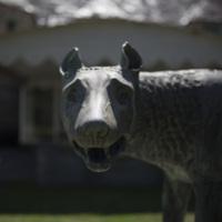 Photograph of Roman Wolf - AO-00146-001.jpg